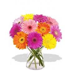 12 Gerberas Vase Bouquet